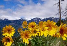 Prozdrowotne właściwości wybranych roślin Wstęp