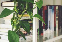 jak urządzić biblioteczkę w domu?