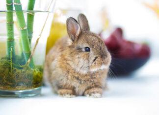 Produkty dla Twoich zwierząt